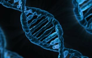 activating genetic switches dna
