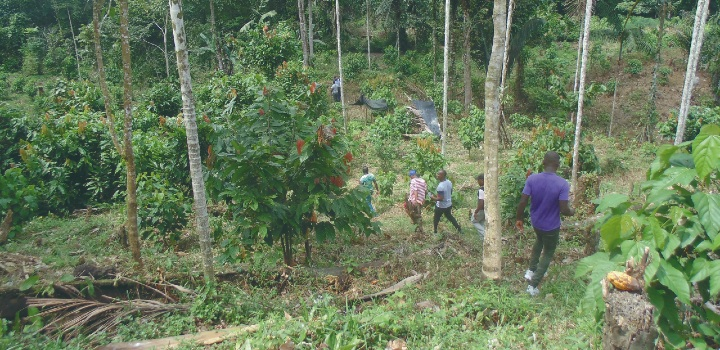 Field activities in the Choco cacao expedition