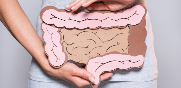 Partial view of woman holding cardboard large intestine