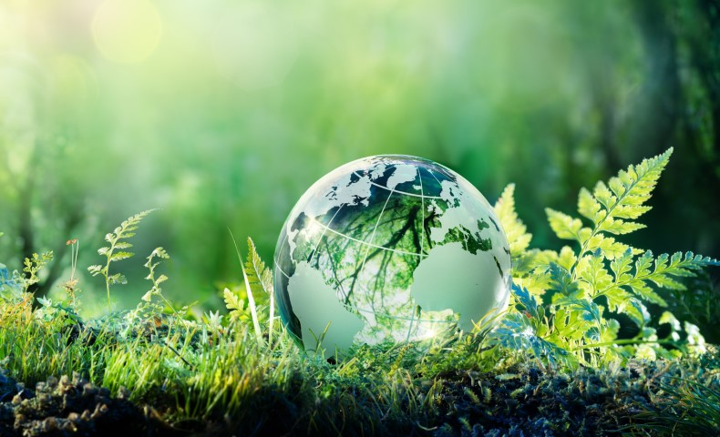 Glass globe on grass