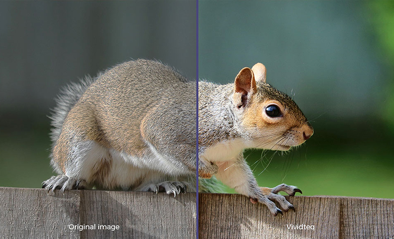 Picture of squirrel with vivdteq applied